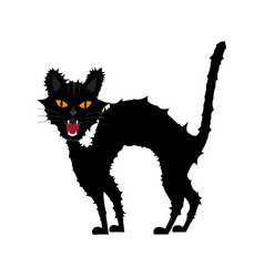 halloween growl black cat vector image