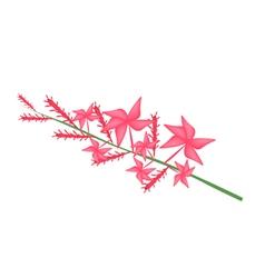 Red plumbago indica flower or red plumbago flower vector