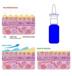 Nasal mucosa cells and micro cilia scheme vector