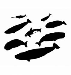 Several whales vector