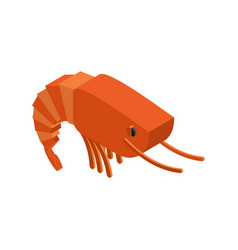 shrimp isolated crustaceans on white background vector image vector image