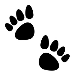 Black animal paws print isolated on white vector image vector image