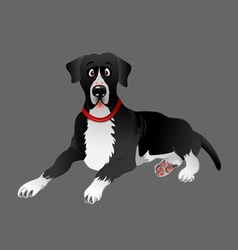 dog Great Dane black laying vector image vector image