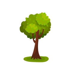Green deciduous tree with round crown vector