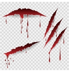 Bloody scratch marks vector image