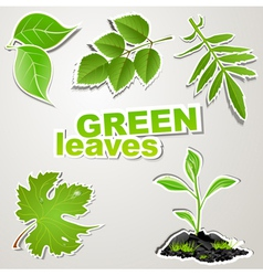 Set sticker green leaves vector