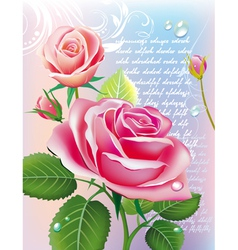 with roses vector image