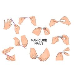 Manicure and pedicure hands feet nails vector
