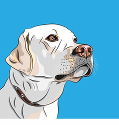 White dog breed labrador retriever vector