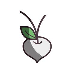White beet organic healthy vegetable vector