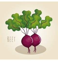 beet fresh vegetable icon vector image