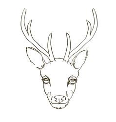 deer sketch animal vector image