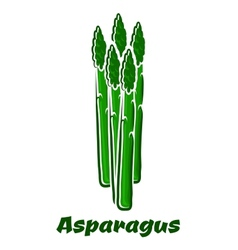 Green asparagus vegetable spears on white vector