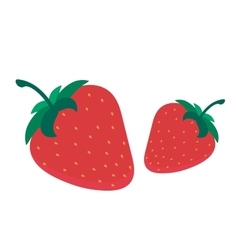 Strawberry fruit isolated on vector