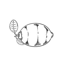 lemon sketch vector image