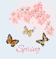 Spring background cherry and butterflies vector image