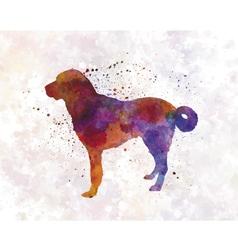Anatolian shepherd dog in watercolor vector