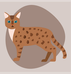Cat breed bengal leopard cute pet brown fluffy vector