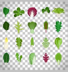 Green salad leaves on transparent background vector