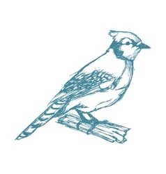 Bird on branch sketch blue vintage vector