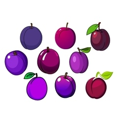 Fresh isolated purple and violet plum fruits vector image