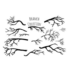 hand drawn tree branches collection vector image