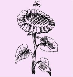 sunflower bee vector image