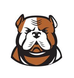 American bulldog head front retro vector