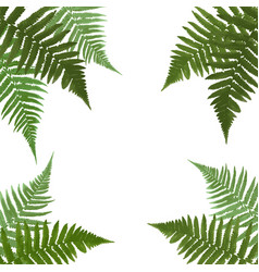 Fern leaf background with white fram vector