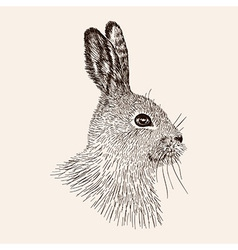 Sketch rabbit hand drawn the hare realistic vector