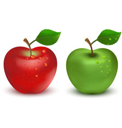 Red apple and green apple vector