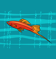 Swordtail aquarium fish vector