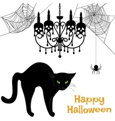 webs and black cat vector image