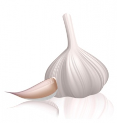 garlic with clove vector image vector image