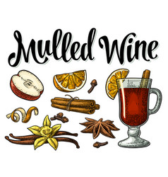 Mulled wine with glass and ingredients vector