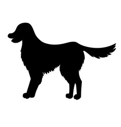 Silhouette of golden retriever isolated on white vector
