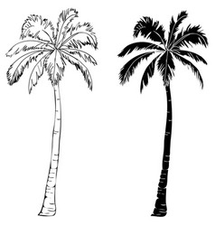 black single palm tree silhouette icon isolated vector image