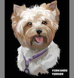 Coloful portrait of yorkshire terrier vector