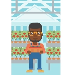 Farmer collecting tomatos vector image vector image
