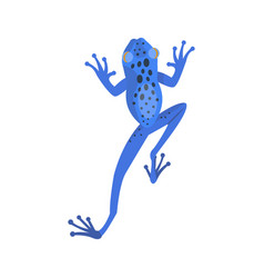 frog cartoon tropical blue animal cartoon nature vector image