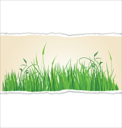 Green grass on torn paper vector