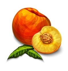 Orange natural organic peach fruit vector