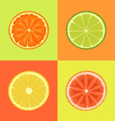 Citrus on different colors backgrounds vector