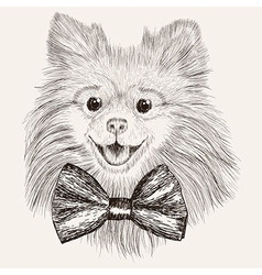 Sketch spitz with bow tie hand drawn dog vector