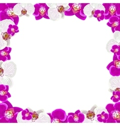 Beautiful orchid flowers frame isolated on white vector