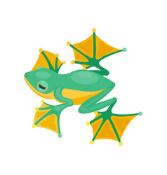Frog cartoon tropical green animal cartoon nature vector