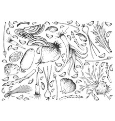 Hand drawn of bulb and stem vegetables background vector