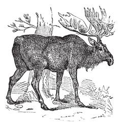 Moose vintage vector image vector image