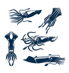 Squid sea animal icon set for seafood design vector