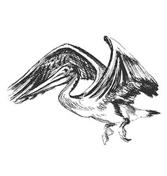 Hand sketch of a flying pelican vector
